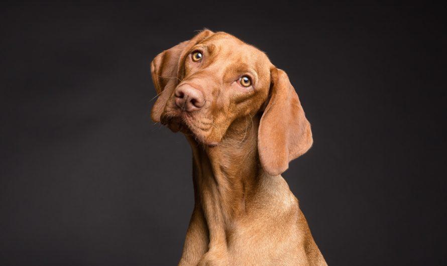 Information om hundförsäkringar